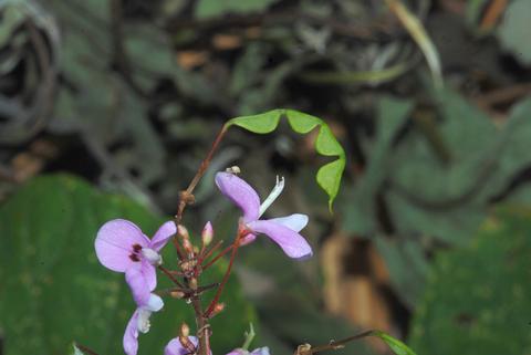 Image http://bioimages.vanderbilt.edu/lq/thomas/w0359-01-03.jpg