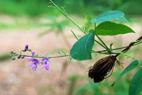 Image http://bioimages.vanderbilt.edu/lq/thomas/w0361-01-05.jpg