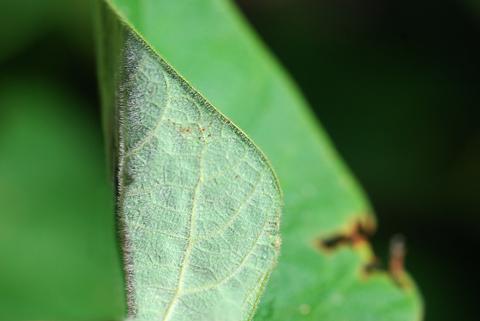 Image http://bioimages.vanderbilt.edu/lq/thomas/w0362-01-09.jpg