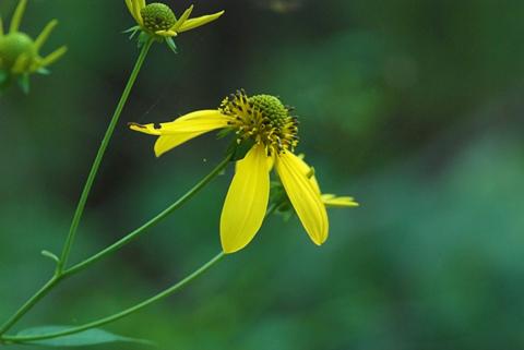 Image http://bioimages.vanderbilt.edu/lq/thomas/w0363-01-01.jpg