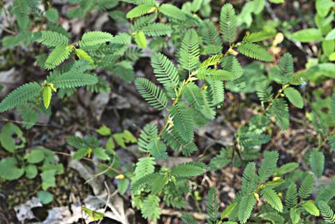 Image http://bioimages.vanderbilt.edu/lq/thomas/w0364-01-05.jpg