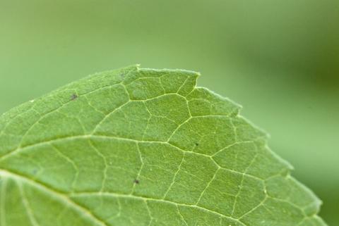 Image http://bioimages.vanderbilt.edu/lq/thomas/w0366-02-01.jpg