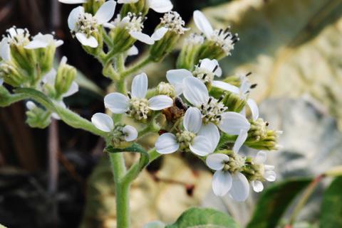 Image http://bioimages.vanderbilt.edu/lq/thomas/w0368-00-04.jpg