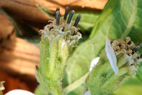 Image http://bioimages.vanderbilt.edu/lq/thomas/w0368-00-12.jpg