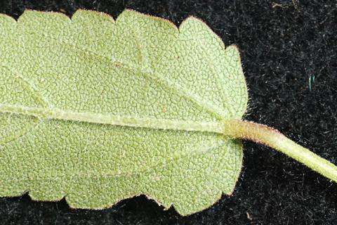 Image http://bioimages.vanderbilt.edu/lq/thomas/w0371-08-01.jpg