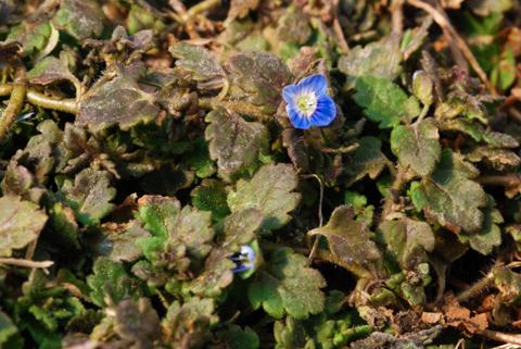 Image http://bioimages.vanderbilt.edu/lq/thomas/w0385-01-03.jpg