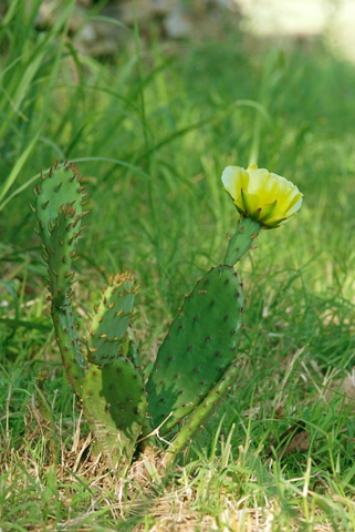Image http://bioimages.vanderbilt.edu/lq/thomas/w0408-01-03.jpg