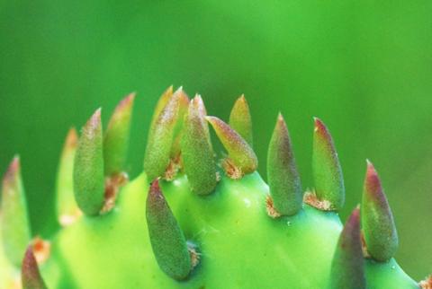 Image http://bioimages.vanderbilt.edu/lq/thomas/w0408-01-04.jpg