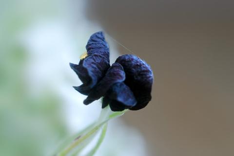 Image http://bioimages.vanderbilt.edu/lq/thomas/w0410-01-01.jpg