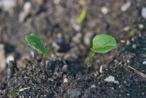 Image http://bioimages.vanderbilt.edu/lq/thomas/w0410-02-01.jpg