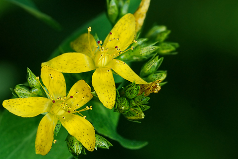 Image http://bioimages.vanderbilt.edu/lq/thomas/w0413-01-01.jpg