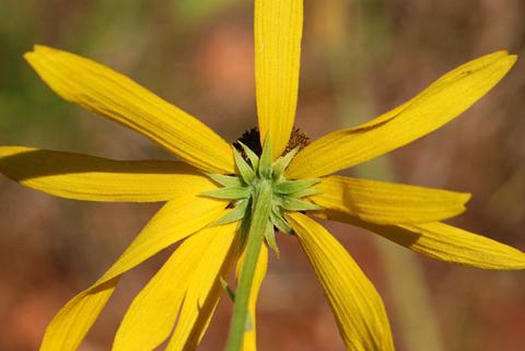 Image http://bioimages.vanderbilt.edu/lq/thomas/w0415-02-09.jpg