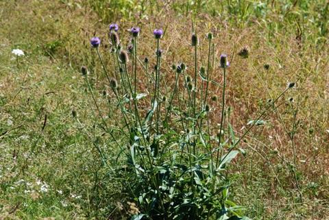 Image http://bioimages.vanderbilt.edu/lq/thomas/w0416-01-09.jpg