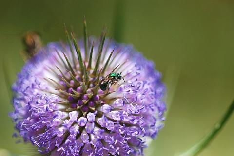 Image http://bioimages.vanderbilt.edu/lq/thomas/w0416-01-10.jpg