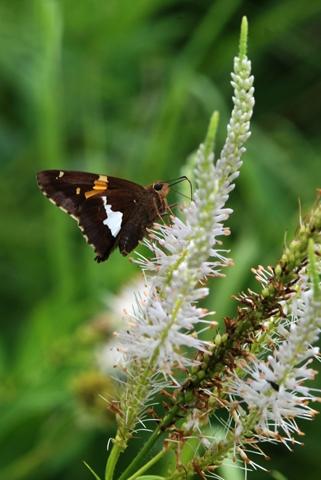 Image http://bioimages.vanderbilt.edu/lq/thomas/w0419-01-02.jpg