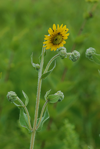Image http://bioimages.vanderbilt.edu/lq/thomas/w0419-03-01.jpg