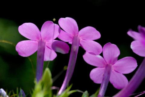 Image http://bioimages.vanderbilt.edu/lq/thomas/w0422-01-01.jpg