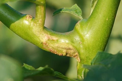 Image http://bioimages.vanderbilt.edu/lq/thomas/w0423-01-05.jpg