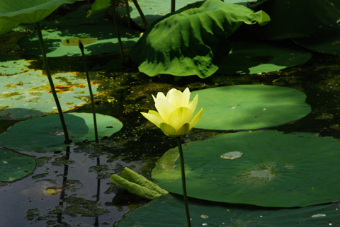 Image http://bioimages.vanderbilt.edu/lq/thomas/w0425-00-01.jpg