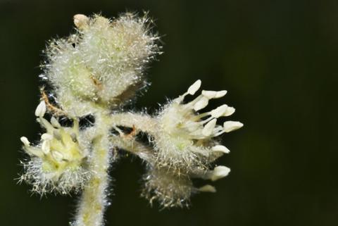 Image http://bioimages.vanderbilt.edu/lq/thomas/w0429-01-11.jpg