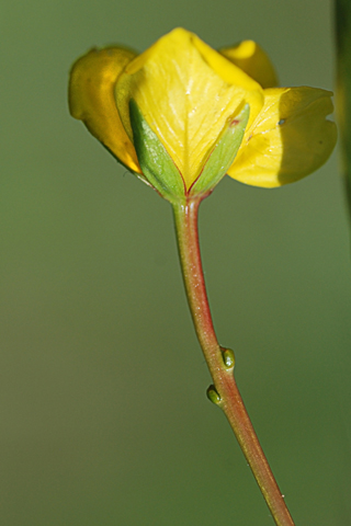 Image http://bioimages.vanderbilt.edu/lq/thomas/w0430-01-01.jpg