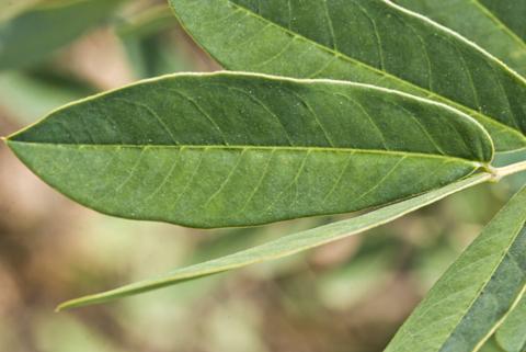 Image http://bioimages.vanderbilt.edu/lq/thomas/w0437-01-07.jpg
