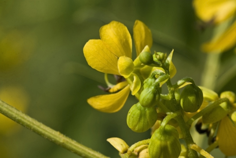 Image http://bioimages.vanderbilt.edu/lq/thomas/w0437-01-10.jpg