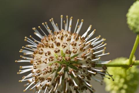 Image http://bioimages.vanderbilt.edu/lq/thomas/w0440-04-07.jpg