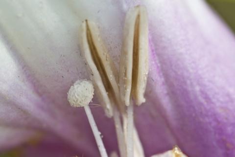Image http://bioimages.vanderbilt.edu/lq/thomas/w0441-01-07.jpg