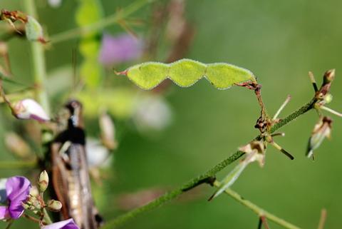 Image http://bioimages.vanderbilt.edu/lq/thomas/w0445-01-09.jpg