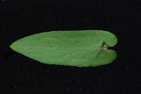 Image http://bioimages.vanderbilt.edu/lq/thomas/w0446-02-04.jpg