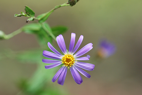 Image http://bioimages.vanderbilt.edu/lq/thomas/w0446-02-08.jpg