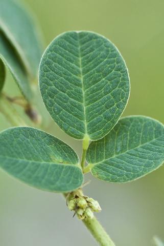 Image http://bioimages.vanderbilt.edu/lq/thomas/w0447-01-04.jpg