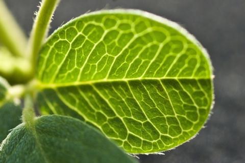 Image http://bioimages.vanderbilt.edu/lq/thomas/w0447-01-08.jpg