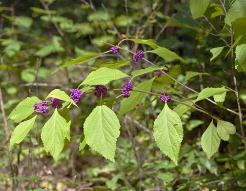 Image http://bioimages.vanderbilt.edu/lq/thomas/w0448-01-03.jpg