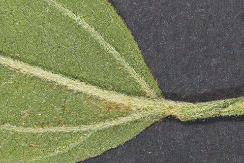 Image http://bioimages.vanderbilt.edu/lq/thomas/w0451-01-02.jpg