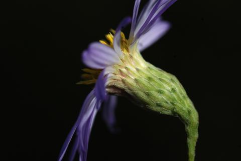 Image http://bioimages.vanderbilt.edu/lq/thomas/w0453-01-01.jpg
