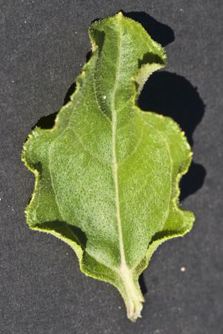 Image http://bioimages.vanderbilt.edu/lq/thomas/w0456-01-07.jpg