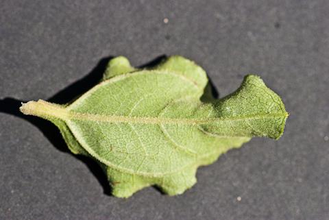 Image http://bioimages.vanderbilt.edu/lq/thomas/w0456-01-09.jpg