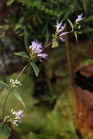 Image http://bioimages.vanderbilt.edu/lq/thomas/w0458-01-01.jpg