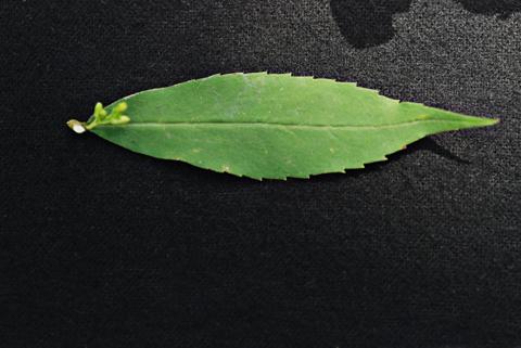 Image http://bioimages.vanderbilt.edu/lq/thomas/w0461-01-05.jpg