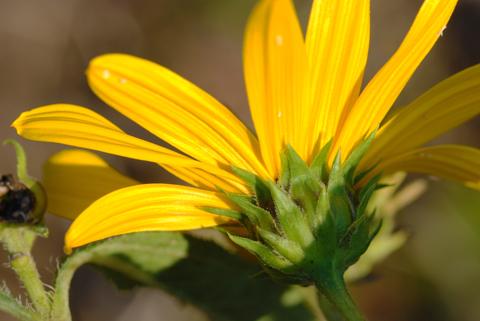 Image http://bioimages.vanderbilt.edu/lq/thomas/w0463-01-02.jpg