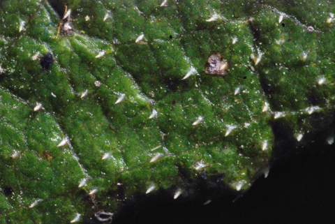 Image http://bioimages.vanderbilt.edu/lq/thomas/w0463-01-03.jpg