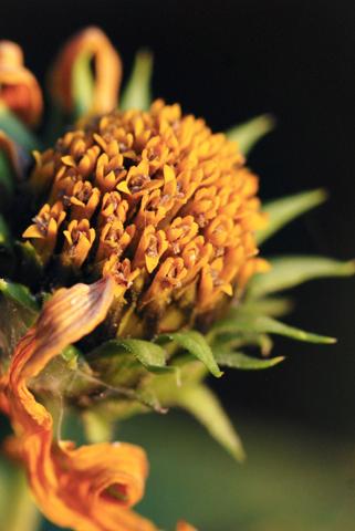 Image http://bioimages.vanderbilt.edu/lq/thomas/w0463-01-04.jpg