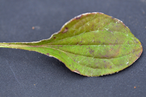 Image http://bioimages.vanderbilt.edu/lq/thomas/w0468-01-04.jpg