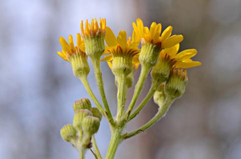 Image http://bioimages.vanderbilt.edu/lq/thomas/w0469-01-03.jpg