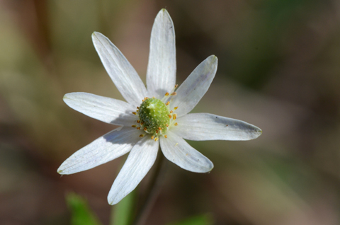 Image http://bioimages.vanderbilt.edu/lq/thomas/w0472-01-06.jpg