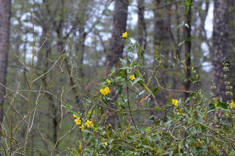 Image http://bioimages.vanderbilt.edu/lq/thomas/w0476-01-04.jpg