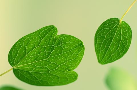 Image http://bioimages.vanderbilt.edu/lq/thomas/w0477-01-01.jpg