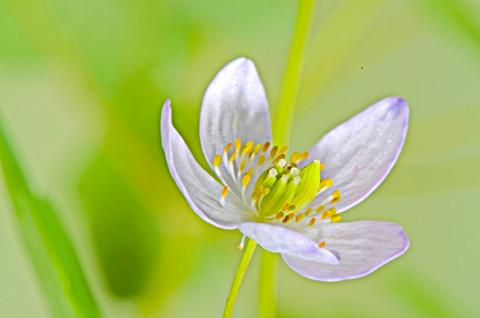Image http://bioimages.vanderbilt.edu/lq/thomas/w0477-01-06.jpg